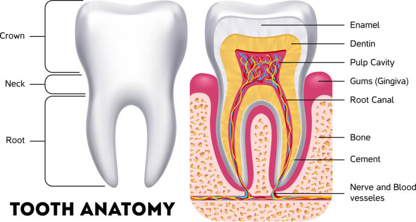 Getting to the Root of Teeth & Gum Sensitivity